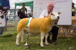 1 Female Champion and Supreme Champion Texel - Padraic Niland