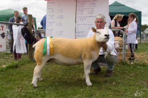 2 Reserve Female Champion and Reserve Supreme Champion - Tom Kenny